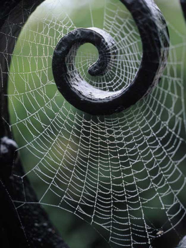 spider spiral